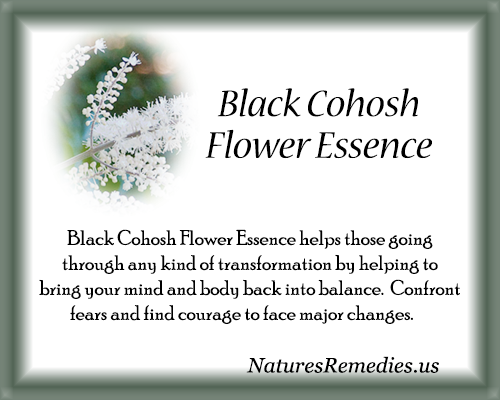 Black Cohosh Flower Essence - Nature's Remedies