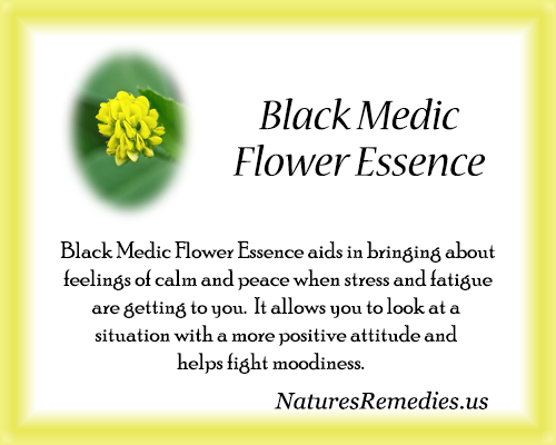 Black Medic Flower Essence - Nature's Remedies