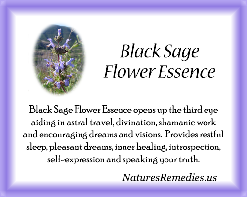 Black Sage Flower Essence - Nature's Remedies