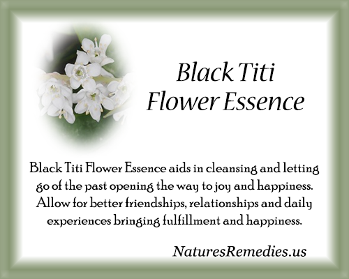 Black Titi Flower Essence - Nature's Remedies