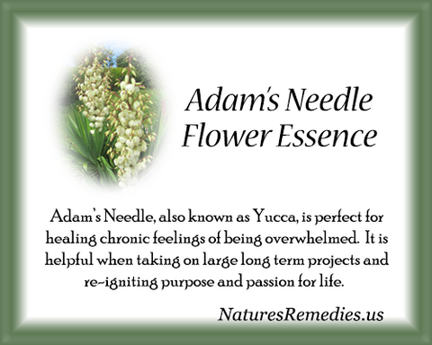 Adam's Needle Flower Essence - Nature's Remedies