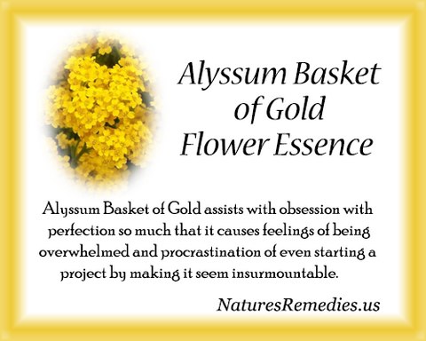 Alyssum Basket of Gold Flower Essence - Nature's Remedies