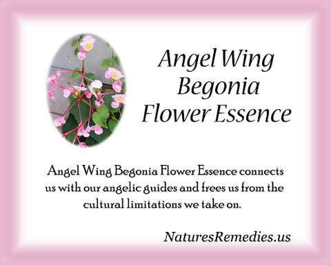 Angel Wing Begonia Flower Essence - Nature's Remedies