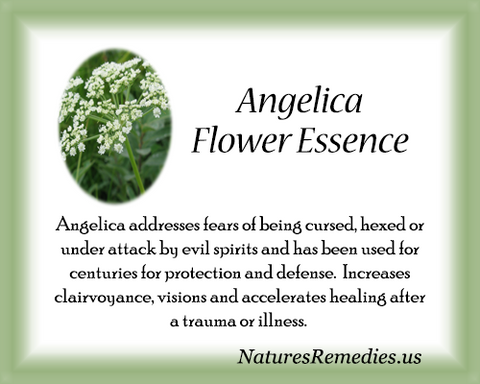 Angelica Flower Essence - Nature's Remedies