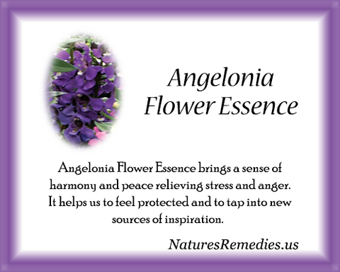 Angelonia Flower Essence - Nature's Remedies