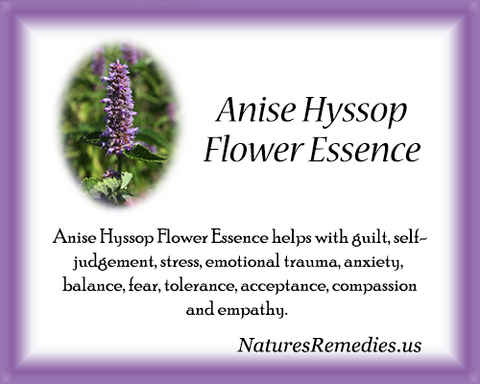 Anise Hyssop Flower Essence - Nature's Remedies