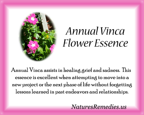 Annual Vinca Flower Essence - Nature's Remedies