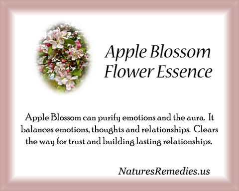 Apple Blossom Flower Essence - Nature's Remedies