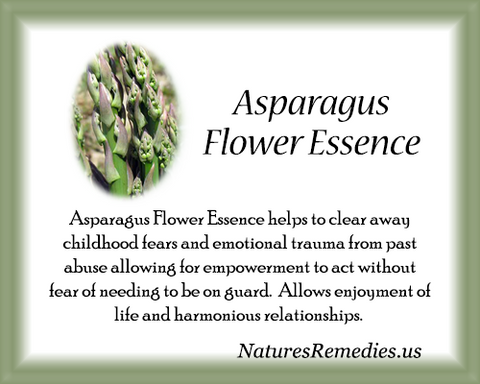 Asparagus Flower Essence - Nature's Remedies