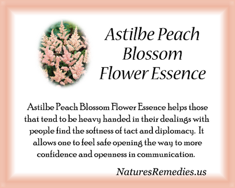 Astilbe Peach Blossom Flower Essence