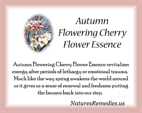 Autumn Flowering Cherry Flower Essence - Nature's Remedies