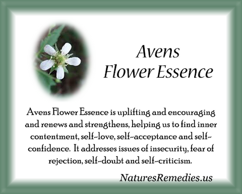 Avens Flower Essence - Nature's Remedies