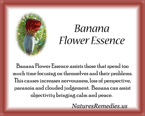 Banana Flower Essence - Nature's Remedies