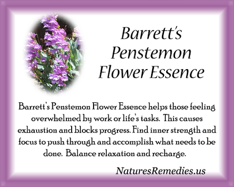Barrett's Penstemon Flower Essence - Nature's Remedies