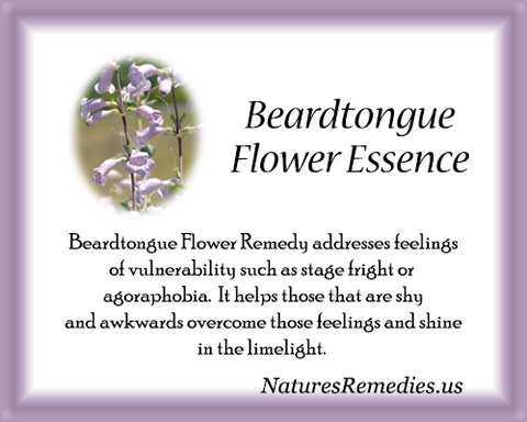 Beardtongue Flower Essence - Nature's Remedies