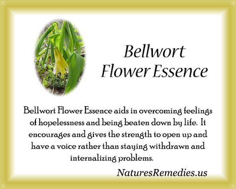 Bellwort Flower Essence - Nature's Remedies