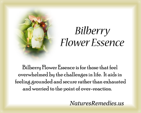 Bilberry Flower Essence - Nature's Remedies