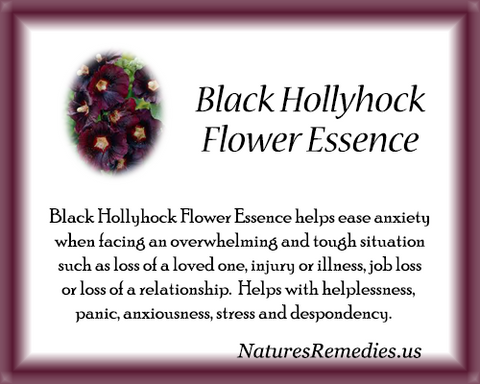 Black Hollyhock Flower Essence - Nature's Remedies