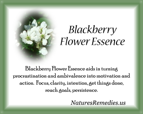 Blackberry Flower Essence - Nature's Remedies