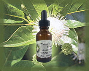 Button Bush Flower Essence - Nature's Remedies