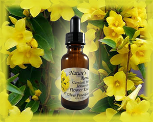Carolina Yellow Jessamine Flower Essence - Nature's Remedies