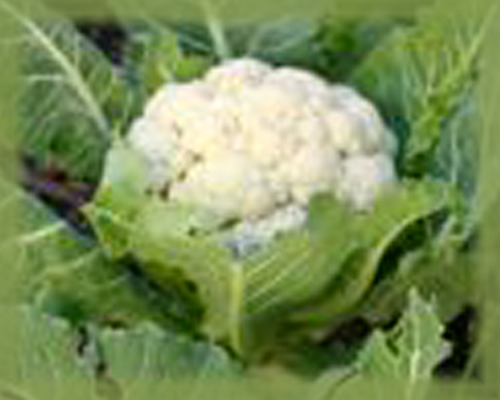 Cauliflower Flower Essence - Nature's Remedies