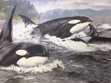 Orca Stration Brian Jarvi Signed Numbered Print Killer Whale Ted Danson