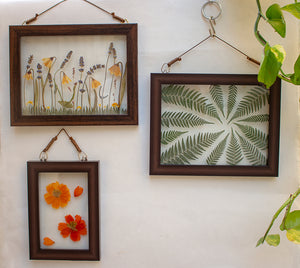 Pressed Ferns - Wall Frames