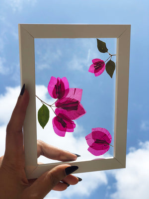 Bougainville Affair - Wall Frame