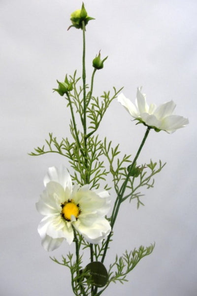 Cosmos Spray White