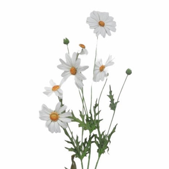 Daisy Spray White