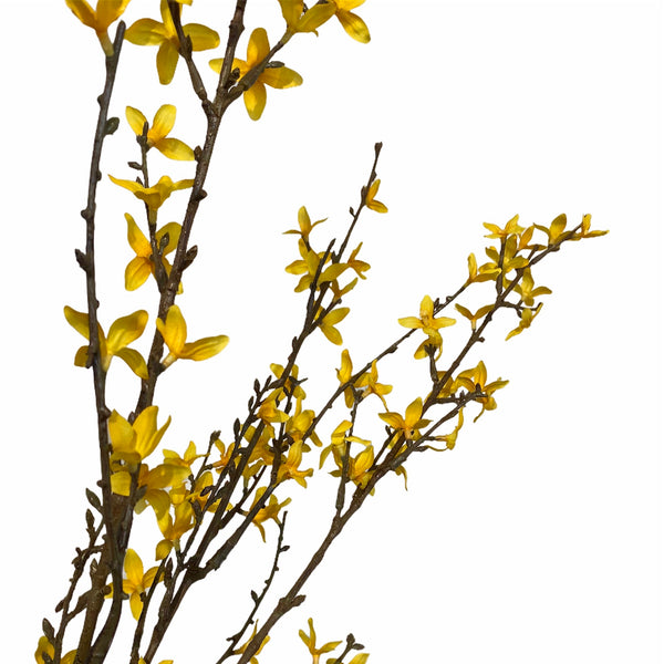 Forsythia Spray