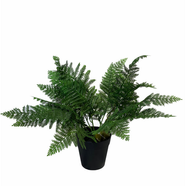 Potted Boston Fern