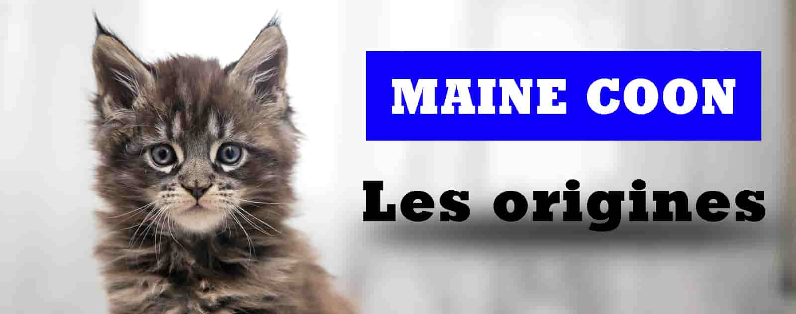 Les origines du Maine Coon