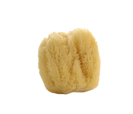 Natural Large Sea Sponge