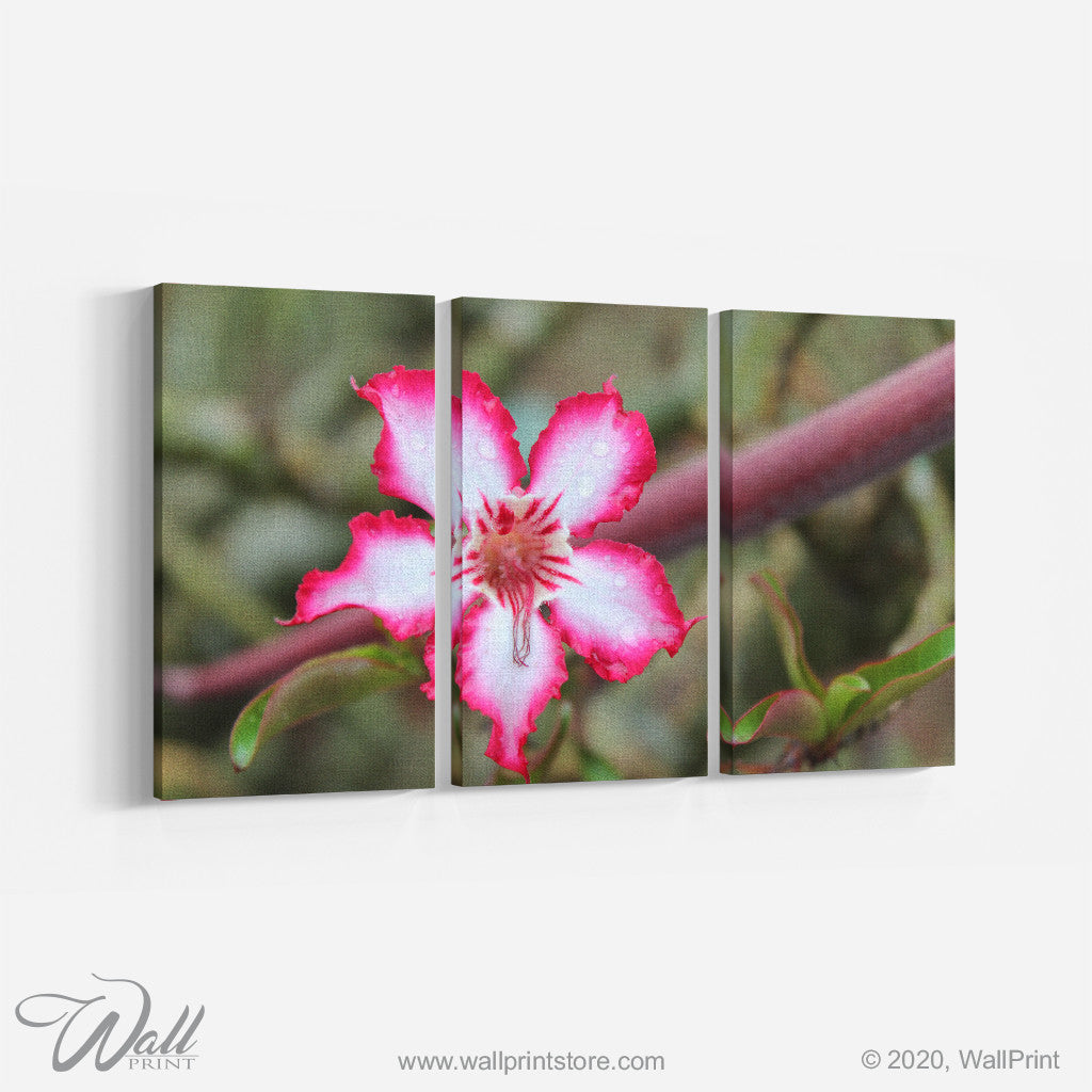 White & Pink flower _3 Piece Split Canvas