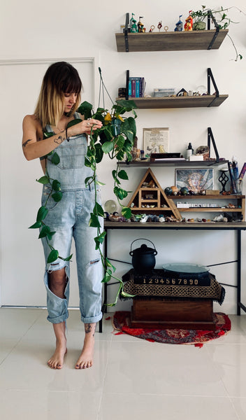 Witchy Tip - Plant Magic (Devil's Ivy)