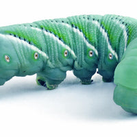 25ct Hornworms - Allans Pet Center