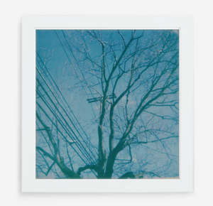 telephone wires - 5x5.2 / Gallery White / No Mat