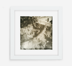 overgrown - 5x5.2 / Gallery White / With Mat