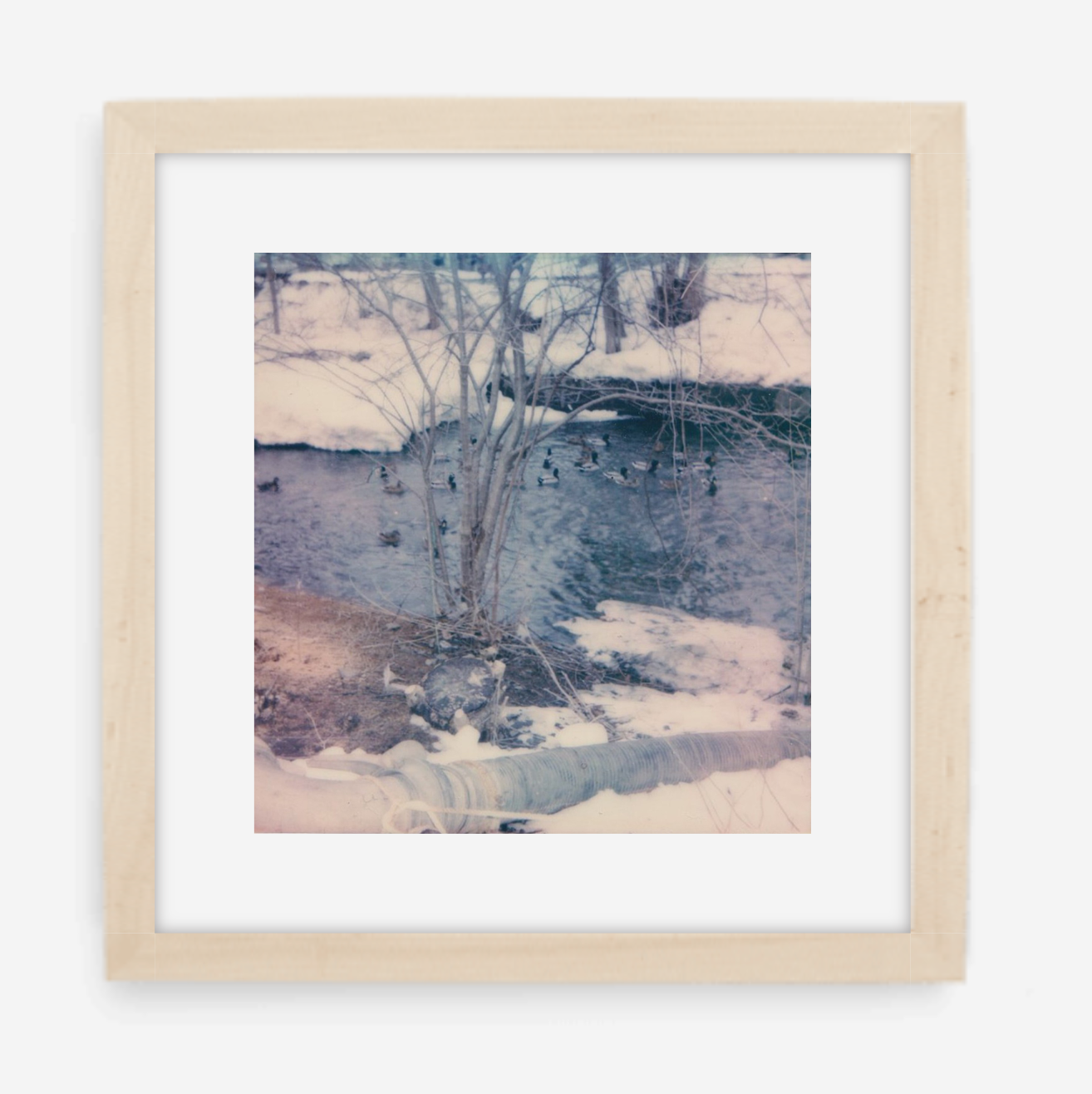 winter ducks - 5x5.2 / Gallery Natural / With Mat