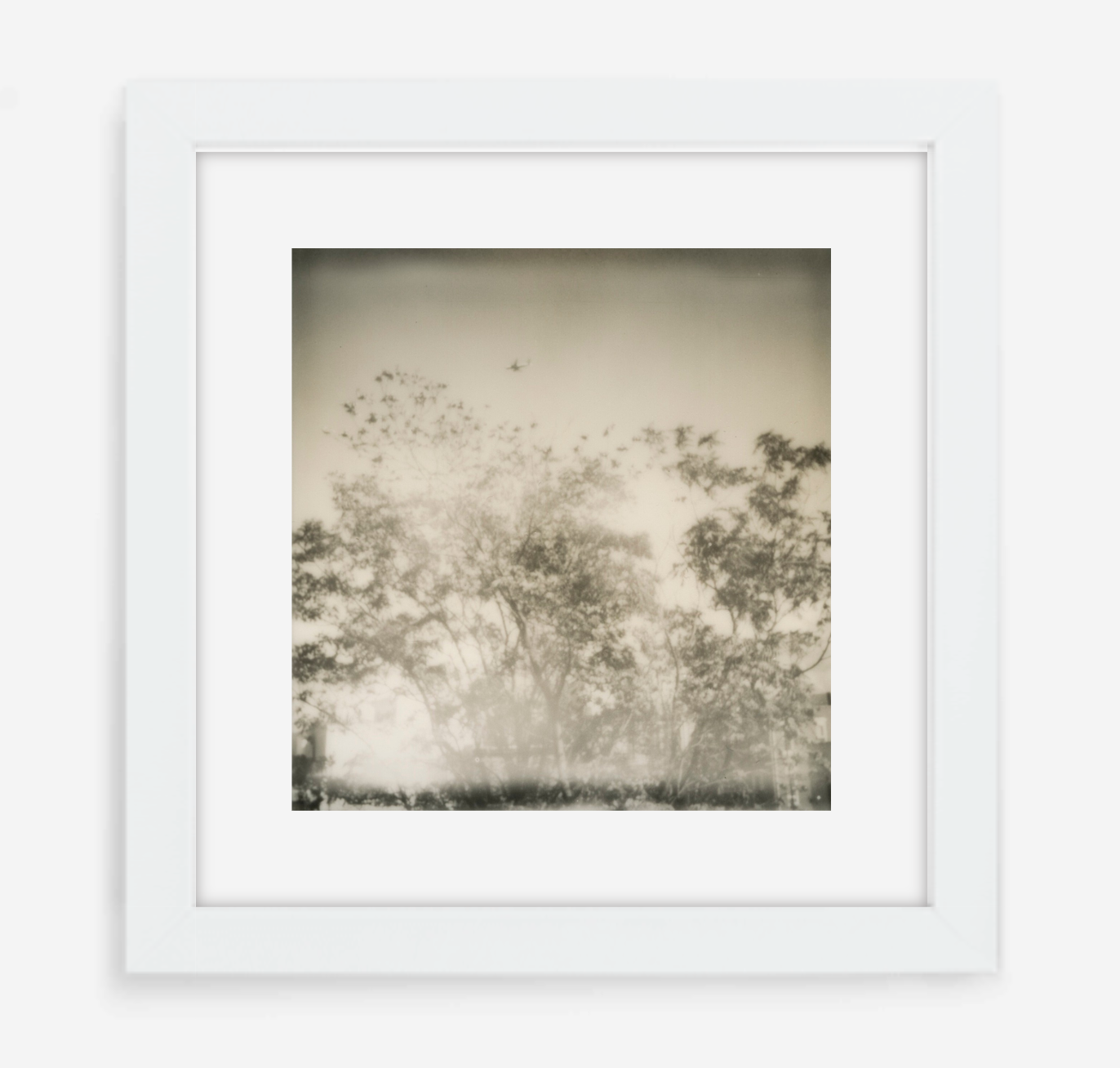 plane over trees - 5x5.2 / Gallery White / With Mat