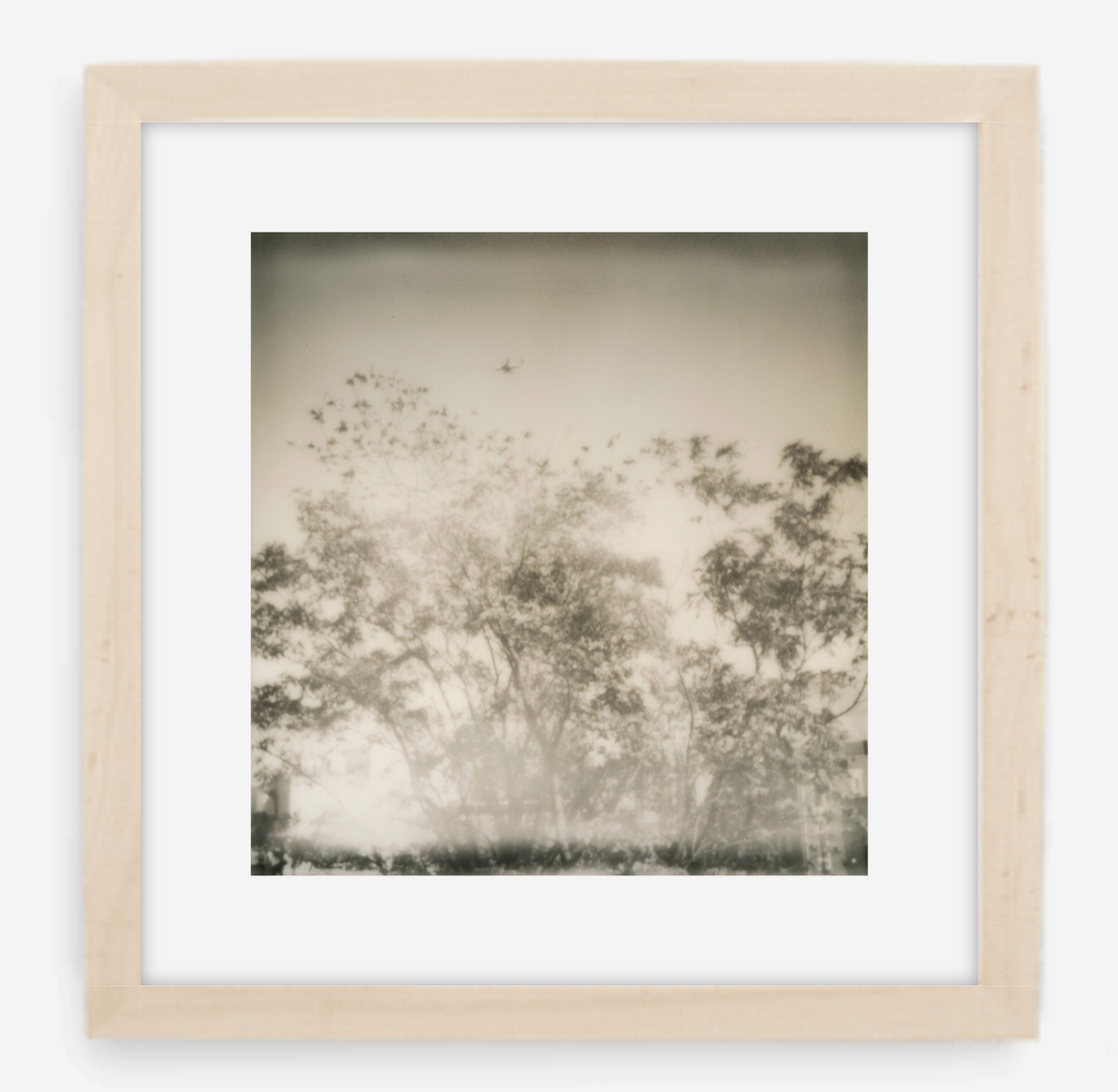 plane over trees - 5x5.2 / Gallery Natural / With Mat