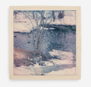 winter ducks - 5x5.2 / Gallery Natural / No Mat