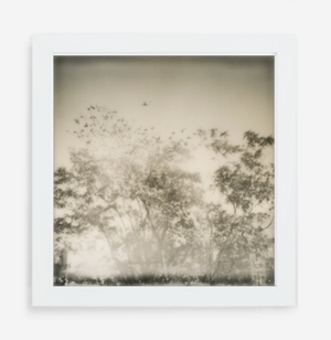 plane over trees - 5x5.2 / Gallery White / No Mat