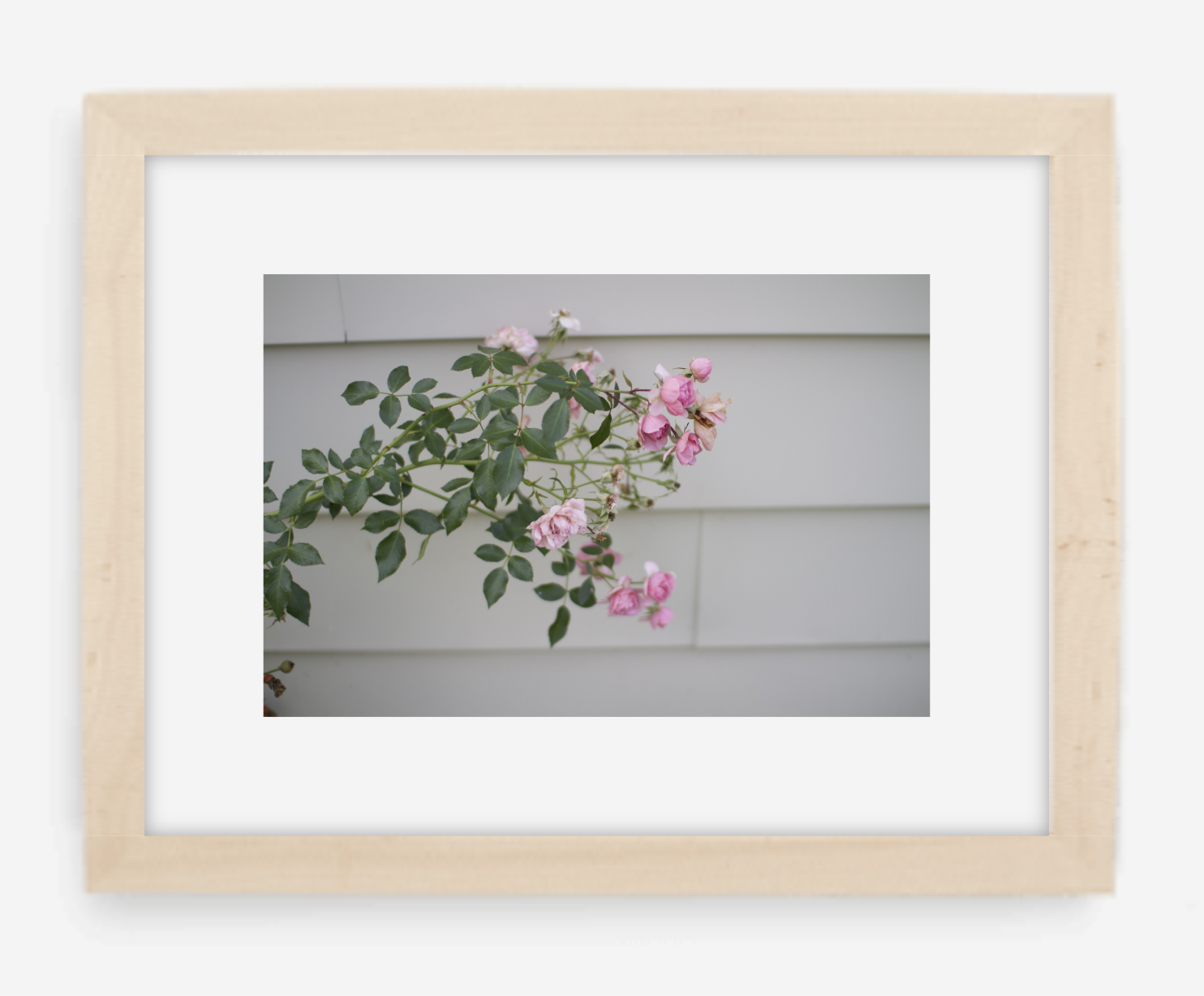 pink rose - 8x12 / gallery natural / with mat - 12x18 / gallery natural / with mat - 16x24 / gallery natural / with mat