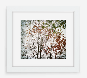autumn - 12x14 / Gallery White / With Mat