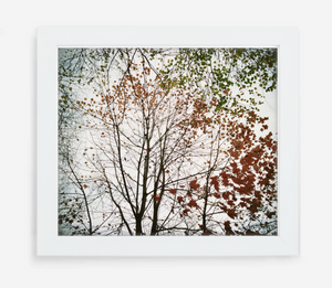 autumn - 12x14 / Gallery White / No Mat