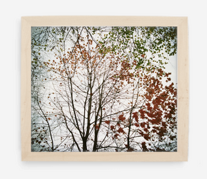 autumn - 12x14 / Gallery Natural / No Mat