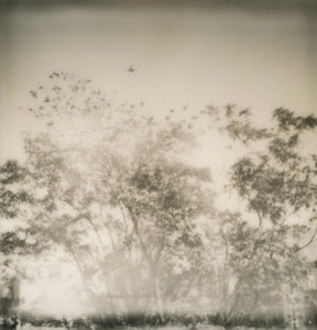 plane over trees - 5x5.2 / No Frame / No Mat